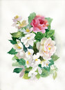 Watercolor roses bouquet flower collection Stock Image