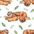 Watercolor seamless pattern with cute sleeping sloths on a tree and leaves on white background