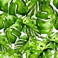 Watercolor Seamless Pattern. Hand Painted Illustration of Tropical Leaves and Flowers. Tropic Summer Motif with Monstera Pattern. Royalty Free Stock Photo