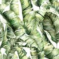 Watercolor seamless pattern with jungle banana leaves. Hand painted exotic leaves and branches isolated on white