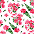 Watercolor seamless pattern with phlox flower. Hand drawn vintage illustration.