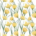Watercolor seamless pattern Yellow Woodland Tulips Royalty Free Stock Photo
