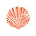 Watercolor Seashell Royalty Free Stock Photo