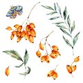 Watercolor set autumn orange berries, leaves, branch and blue moth, natural collection Royalty Free Stock Photo