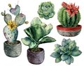 Watercolor set with cactus in a pot and flowers composition. Hand painted cereus, opuntia and echeveria with succulent