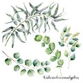 Watercolor set with eucalyptus branch. Hand painted floral illustration with leaves and branches of seeded and silver