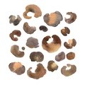 stock image of  Watercolor set of leopard spots.