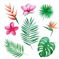 Watercolor set of Tropical leaves and flowers isolated elements on white background. Hand-drawn illustration