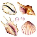 Watercolor shells and pearls set. Hand painted underwater elements isolated on white background. Aquatic illustration