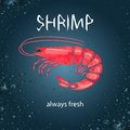 Watercolor shrimp vector illustration. Royalty Free Stock Photo