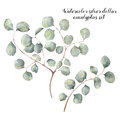 Watercolor silver dollar eucalyptus set. Hand painted floral illustration with round leaves and branches isolated on
