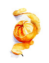 Watercolor sketch of mandarin with peeled spiral skin illustration Stock Images