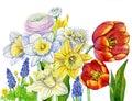 Watercolor spring flowers blooming