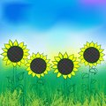 Watercolor sunflower four plants in the field in the morning vector illustration for farmers market oil concept for positive Stock Photography