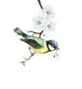 Watercolor tit bird on a blooming apple tree