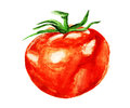 Watercolor tomato Royalty Free Stock Photography
