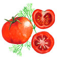 Watercolor tomatoes Royalty Free Stock Photo