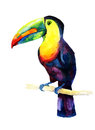 Watercolor toucan bird sitting on a branch