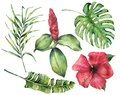 Watercolor tropical flowers and leaves. Hand painted monstera, coconut and banana palm branch, hibiscus, alpinia