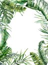 Watercolor tropical frame with exotic leaves. Hand painted floral illustration with banana, coconut and monstera branch