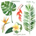 Watercolor tropical plants Royalty Free Stock Photo
