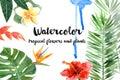 Watercolor tropical plants