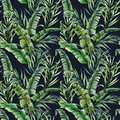 Watercolor tropical seamless pattern with banana and coconut palm leaves. Hand painted greenery exotic branch on dark