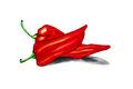 Watercolor two single red pepper isolated on white background,
