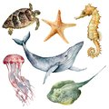 Watercolor underwater animals set. Hand painted whale, starfish, seahorse, stingray, jellyfish and turtle isolated on
