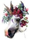 Watercolor Unicorn Illustration.
