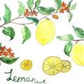 Watercolor vector background fresh lemon branches