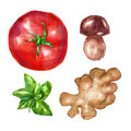 Watercolor vegetables set with mint white mushroom tomato ginger