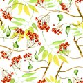 Watercolor viburnum, rowan and elder branches seamless pattern, hand painted on a white background. Branch, bunch of red berries