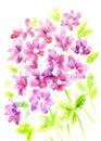 Watercolor vintage summer blooming bouquet