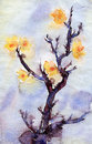Watercolor yellow apricot flowers illustration Royalty Free Stock Photo