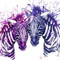 Watercolor zebra illustration cute zebra love card valentine heart valentine poster Royalty Free Stock Photos