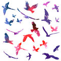 Watercolors birds set of flying illustration Stock Photo