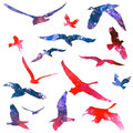Watercolors birds set of flying illustration Stock Photography