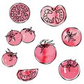 Watercolour Whole Tomato, Tomato Slices, Half of Tomato and Cherry Tomatoes. Fresh Ripe Vegetables Background. Vegan