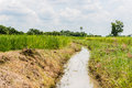 Watercourse in rice field at thailand Royalty Free Stock Photography