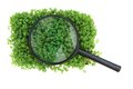 Watercress and magnify glass isolated on the white background Royalty Free Stock Photos
