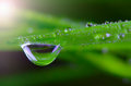Waterdrop on green on a blade of grass Royalty Free Stock Photography