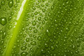 Waterdrops on leaf texture Royalty Free Stock Photo