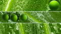 Waterdrops on leaf texture - banners Royalty Free Stock Photo