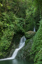 Waterfall beautiful lush in forest Royalty Free Stock Photography