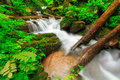 Waterfall in deep forest of thailand at phayao Royalty Free Stock Photos