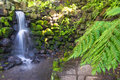 Waterfall and fern landscape Royalty Free Stock Photo