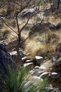Waterfall gone dry in Arizona drought climate Royalty Free Stock Photo