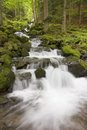 Waterfall in a green forest Stock Image