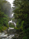 Waterfall in green rain forest new zealand scenary Royalty Free Stock Image
